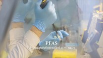 Understanding Developmental Immunotoxicology and the Effects of PFAS