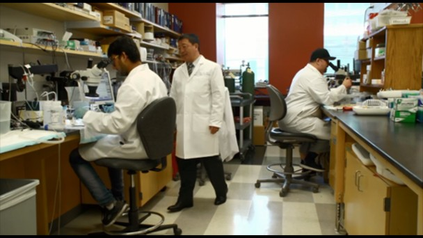 The University of Arizona Department of Medicine, Division of Translational and Regenerative Medicine